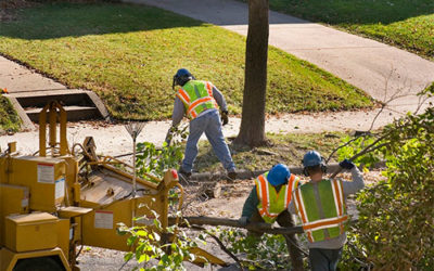 Why Tree Removal is not a Good DIY Project?