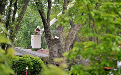 3 Reasons to Hire a Professional for Residential Tree Care