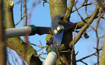 Top 10 Signs It's Time To Prune Your Tree