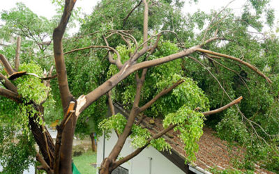 What Indicates That A Trees On Your Yard Property Is Dangerous?
