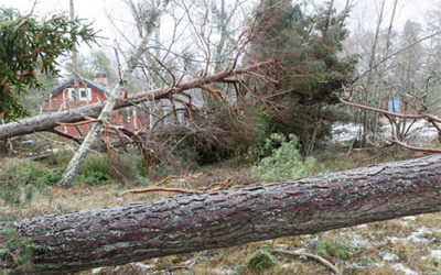 Is it time to have that old tree removed?