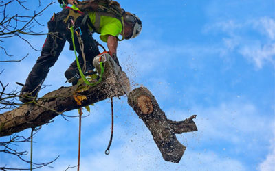 Reasons to Consider Expert Tree Removal Services