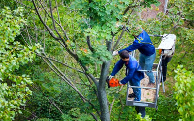 What To Know About Choosing A Tree Service?