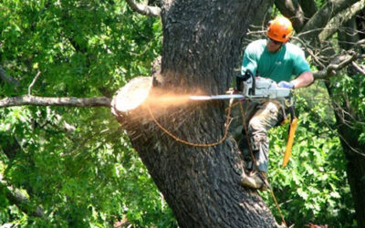 How an Expert Tree Removal Service Can Assist With a Tree Struck By Lightning?